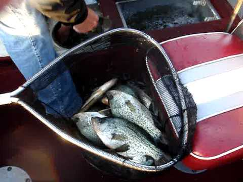 Crappies gone wild with pauls fishing guide iowa clear for Iowa out of state fishing license