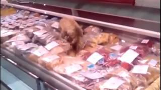 В магазине Владивостока кот съел рыбы на 63 тысячи рублей !
