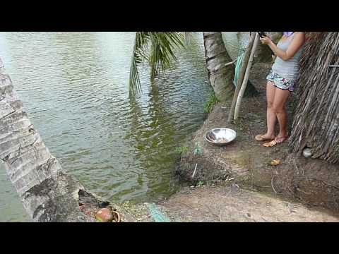 Fishing in soc trang