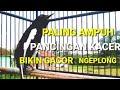 Kacer Poci Gacor Ngeplong Cocok Untuk Kacer Kurang Bunyi Siburung(.mp3 .mp4)Kicau Mania(.mp3 .mp4) Mp3 - Mp4 Download