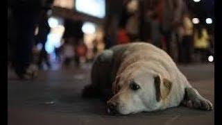 犬と散歩するお婆さん。ある日、とても悲しい出来事が・・・ 【切ない話】 90歳近くになる足腰の弱った1人のお婆さん。 彼女は毎日愛犬の白いレトリーバーとの 散歩を欠かし ...