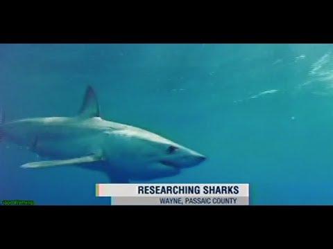 William Paterson University Professor Discusses Sharks on News 12 NJ on 7.26.17