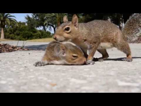 Mother Squirrel Rescues Her Baby