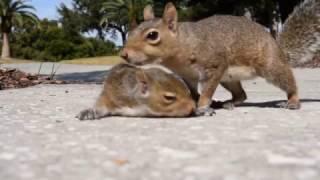 お母さん、ちゃんと来てくれた!木から落ちた子リスを助けに来たお母さんリス