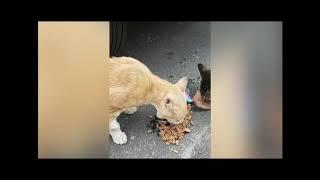Put cat to sleep | 3 days before | FIP virus #cat #cutecate #straycat