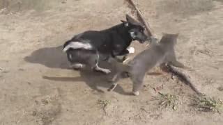 Видео приколы про животных