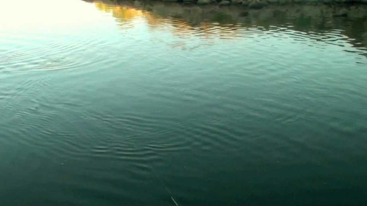 Fishing at devils lake nd youtube for Devils lake north dakota fishing report
