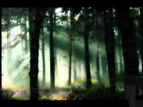 FALLEN LIVES-DAMAGED BALLERINA(ACOUSTIC demo version)