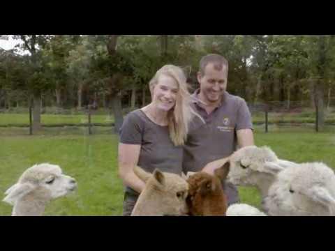 Download Alpacafarm Vorstenbosch - Promo film