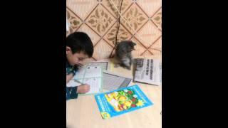 Кот хочет писать