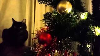 Vlogmas Day Nine: Playful Cat, Christmas Tree and Pretty Baubles Thumbnail