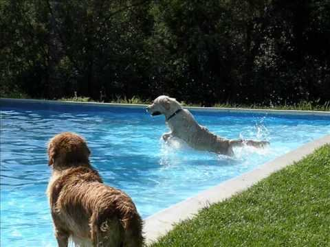 Piscina per Cani e Persone Tana dei Lupi - Tuffati in una vacanza da sogno