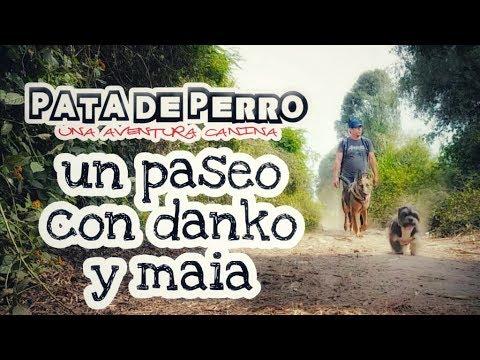 Un paseo con danko y maia - PATA DE PERRO una aventura canina