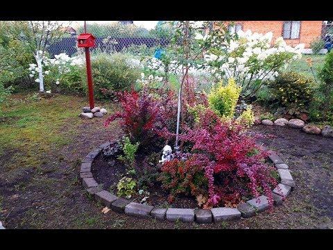 Барбарисы в нашем саду/Сорта/Размножение и уход/Цветная клумба