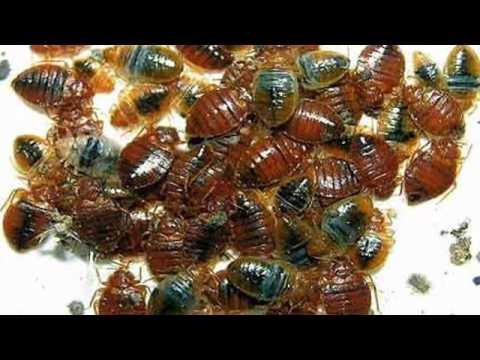 Diatomaceous Earth Bed Bug Killer - Naturally Kill Bed ...