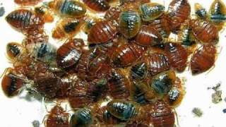 Diatomaceous Earth Bed Bug Killer - Naturally Kill Bed Bugs