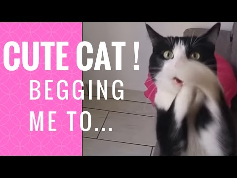 CUTE CAT BEGGING ME TO....