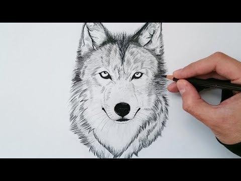 Cómo dibujar un lobo realista explicado paso a paso - How to draw a wolf step by step