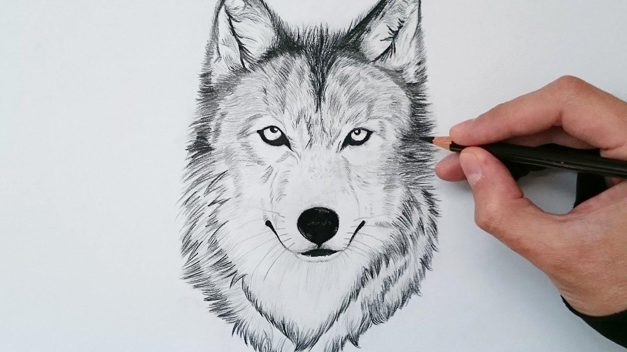 Cómo Dibujar Un Lobo Realista Explicado Paso A Paso How To Draw A