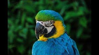 The Science Of Parrots Mimic - A Look How Parrots Talk