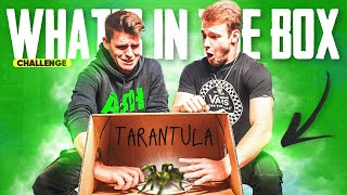 DIRAMO ZMIJE I PAUKE! *what's in the box* | Bruno Lukić & ASH