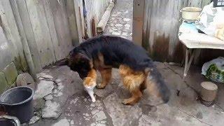 Любовь нечаянно нагрянет! Собака ЛЮБИТ кота в прямом смысле! СМОТРЕТЬ ВСЕМ!!!!