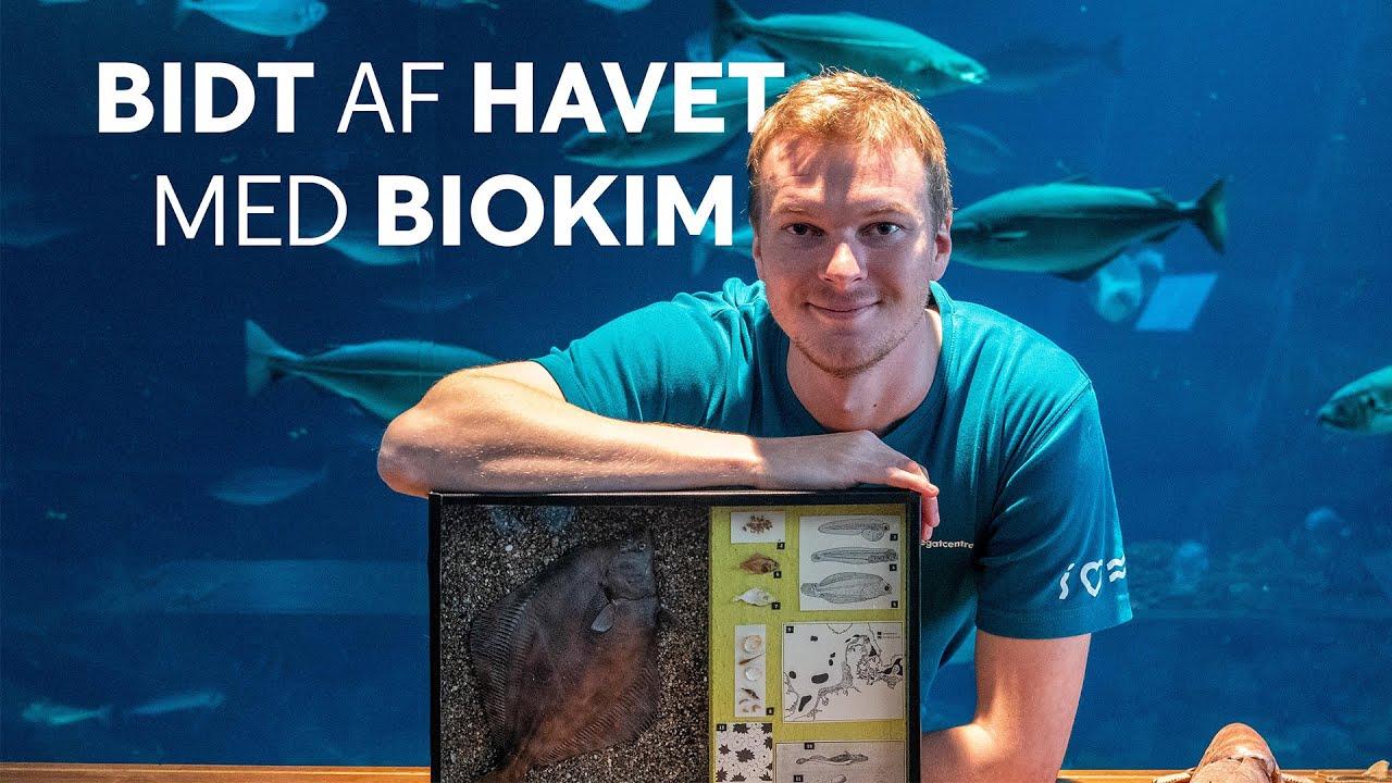 BIDT AF HAVET MED BIOKIM - Fladfisk