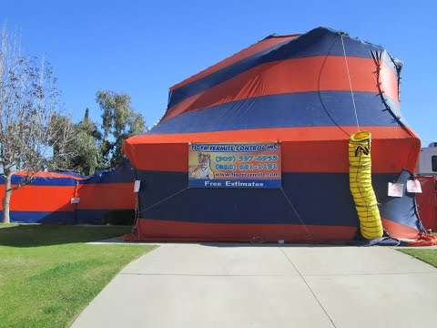 Ways To Lower Termite Fumigation Prices Learn How Much It Costs Now