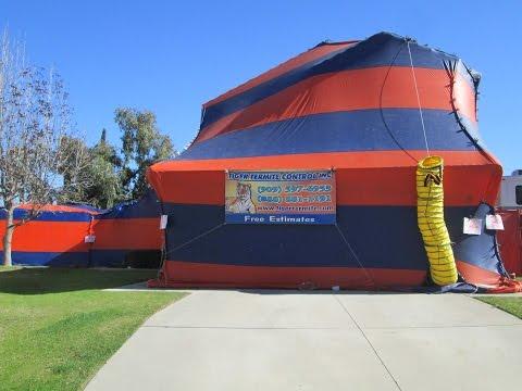 Termite Fumigation Chino Hills, California