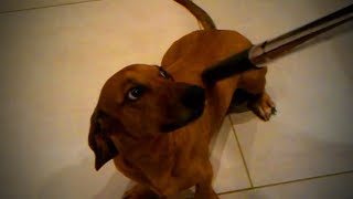 Dogs Vs Vacuum  😂🐶 Funny Dog's Reactions to Vacuum (Part 2) [Funny Pets]