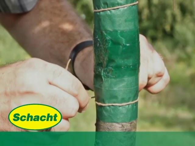 Leimringe an Obstbäumen anbringen - natürlicher Schutz vor Frostspanner-Raupen