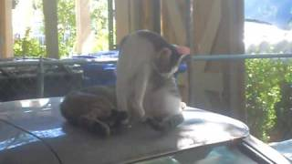 Gwen's Kittens