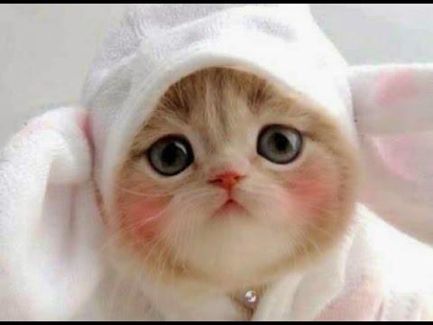 Unduh 93+  Gambar Video Kucing Yang Lucu Paling Bagus