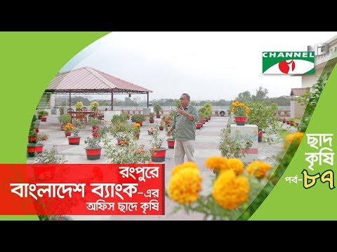 Rooftop farming   EPISODE 87   HD   Shykh Seraj   Channel i   Roof Gardening   ছাদকৃষি  