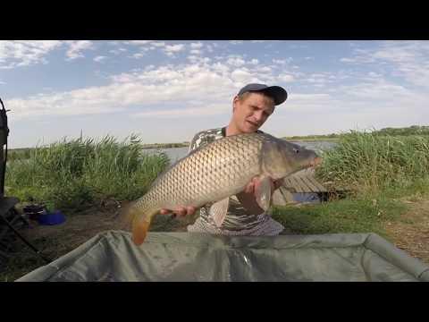 Рыбалка на карпа и сазана в краснодарском крае