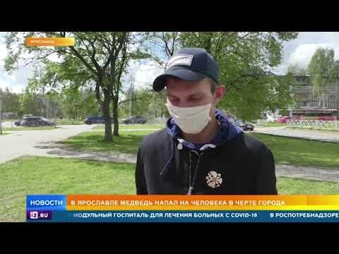Медведь в городе: подробности нападения дикого животного в Ярославле
