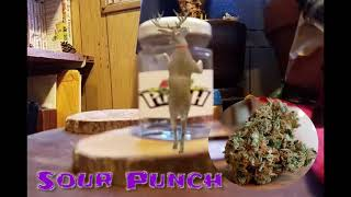 Secret Gardens of Washington SGOW sour punch legal weed cannabis Diablo review