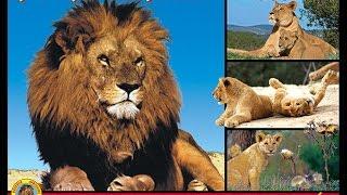 journee a la reserve africaine de sigean 2016
