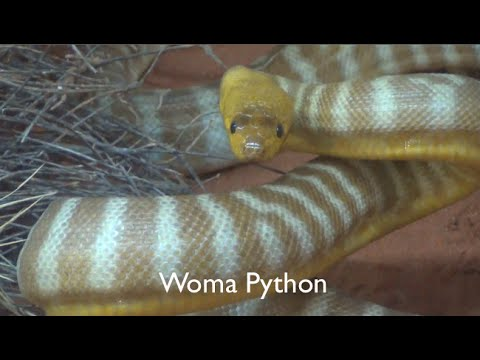Perth WAHS Reptile Expo 2015 - Cold Blooded Cousins