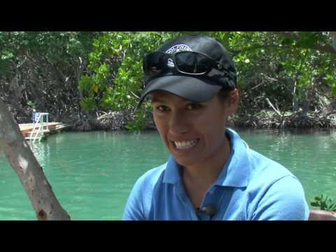 Tortola Dolphin Swim