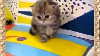 Мега ржачная подборка про то как котята забавляются