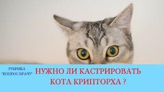 19.01.18 Кастрация кота. Крипторх