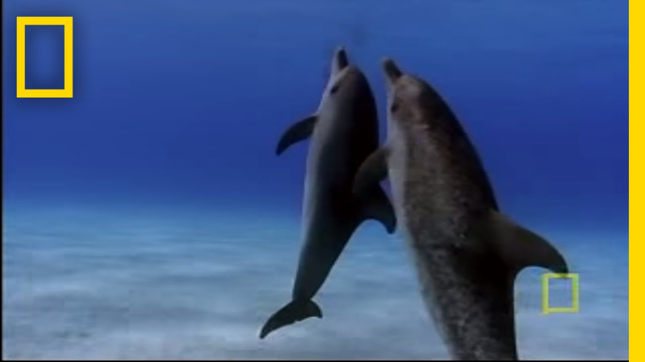 dolphin parenting national geographic youtube - Dolphin Pics