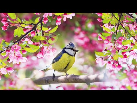 """Relaxing Sleep Music: Deep Meditation Music, Stress Relief,  """"Soothing Sounds Of Nature"""" Tim Janis"""