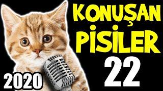 Konuşan Kediler 22 - En Komik Kedi ları 2020