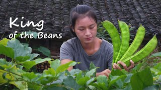Download lagu King of the Beans! GIANT Sword Bean