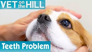 Dog Needs Tooth Operation | FULL EPISODE | S01E07 | Vet On The Hill