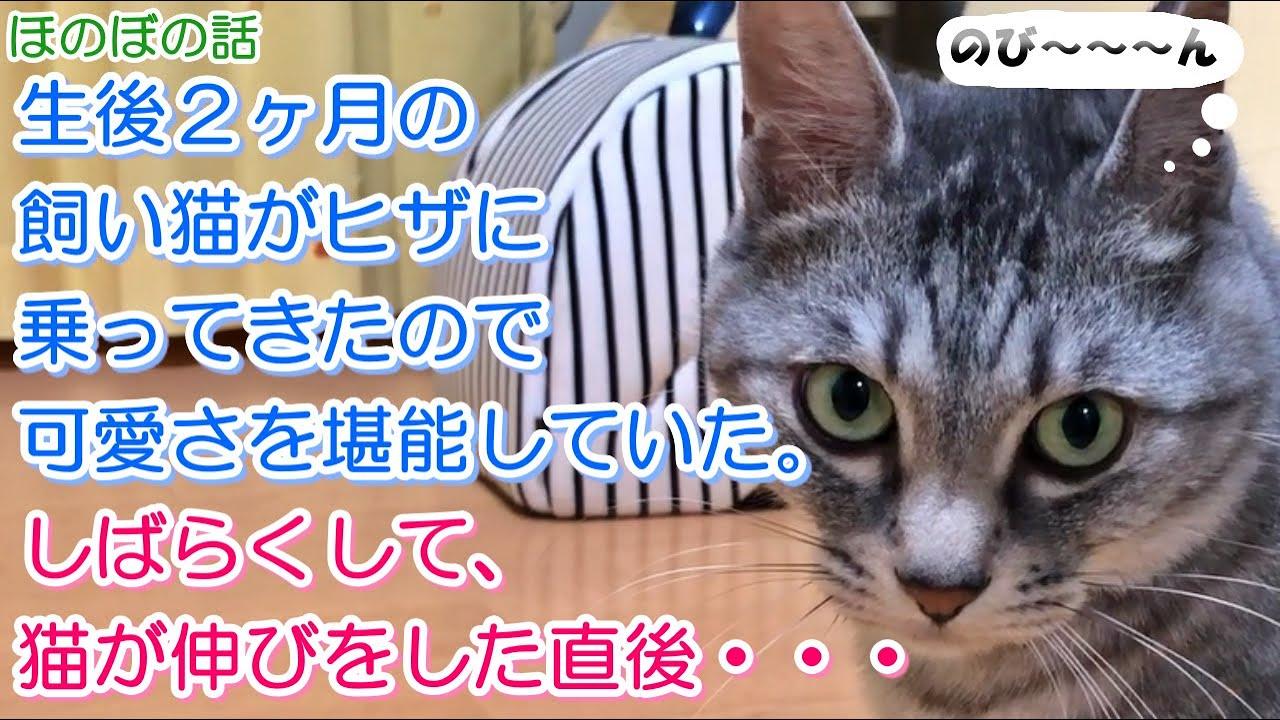 【猫のほのぼの話】生後2ヶ月の飼い猫がヒザに乗ってきたので可愛さを堪能していた。しばらくして、猫が伸びをした直後・・・