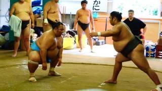 佐渡ヶ嶽部屋所属の琴勇輝関の朝稽古での立会い練習模様。