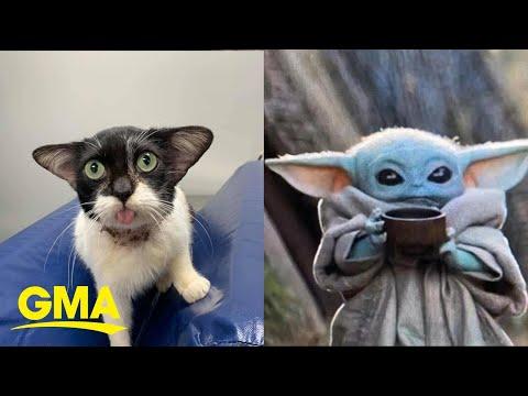 Kathy With a K - ICYMI: Baby Yoda Cat